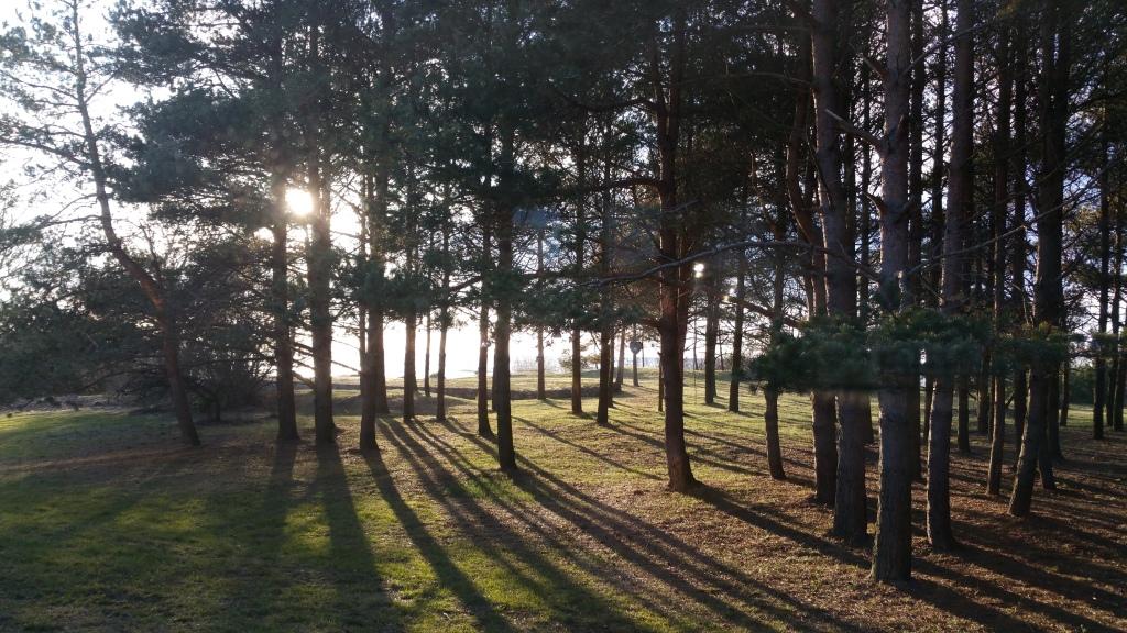 No zāles loga paveras burvīga ainava uz priežu mežu un jūru