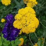 Ziedu skaistums...