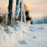 winter_evening_snow_fence-wide