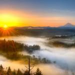 Sunrise-Fog-field-tree-background-3840x2400-1920x1200