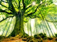 tree-background_111647470_73
