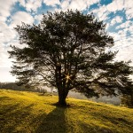 tree-dawn-nature-bucovina-56875