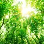trees-1024x683
