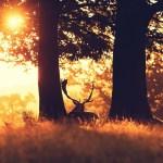 6992624-sun-forest-animal-deer-photo