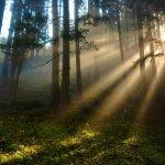 591002__forest-sunlight_p