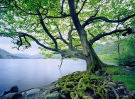 beautiful-tree-and-river