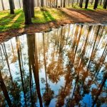 Autumn Reflection Nature Trees Woods Forest Desktop Wallpapers Free