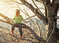 Little boy climbing tree