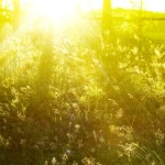 4458698-sunny-wallpapers