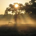 Horse_standing_in_morning_fog__JPEG