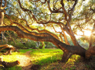 Sunlight-Shining-Through-Twisted-Tree