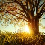 dudarev-mikhail-spring-tree-with-fresh-leaves-on-a-meadow-at-sunset