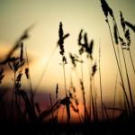 nature-serenity-freedom