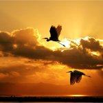 birds_flying_in_the_sky_by_natasha555-d3eubw9