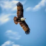 eagle-flight-high-in-sky-wallpaper-768x480