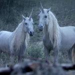 canal-unicorns-hed-2015