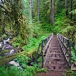 198642-creeks-forest-bridge-path-trees-Oregon-green-ferns-moss-shrubs-nature-landscape-river-748x468