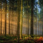 2843724-nature-landscape-sunrise-forest-sun-rays-germany-trees-mist-grass-sunlight-morning___landscape-nature-wallpapers
