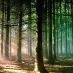 6781731-cool-forest-sun