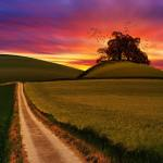 4k-wallpaper-agriculture-android-wallpaper-1146708