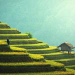 agriculture-asia-china-235648