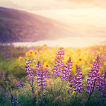 wildflower-sunrise-debi-bishop