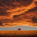 tree-736875_960_720