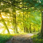 british-woodland_2422419b