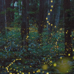 firefly-forest-3
