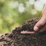 Soil-Planting